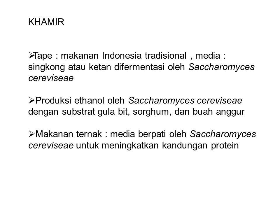 KHAMIR Tape : makanan Indonesia tradisional , media : singkong atau ketan difermentasi oleh Saccharomyces cereviseae.