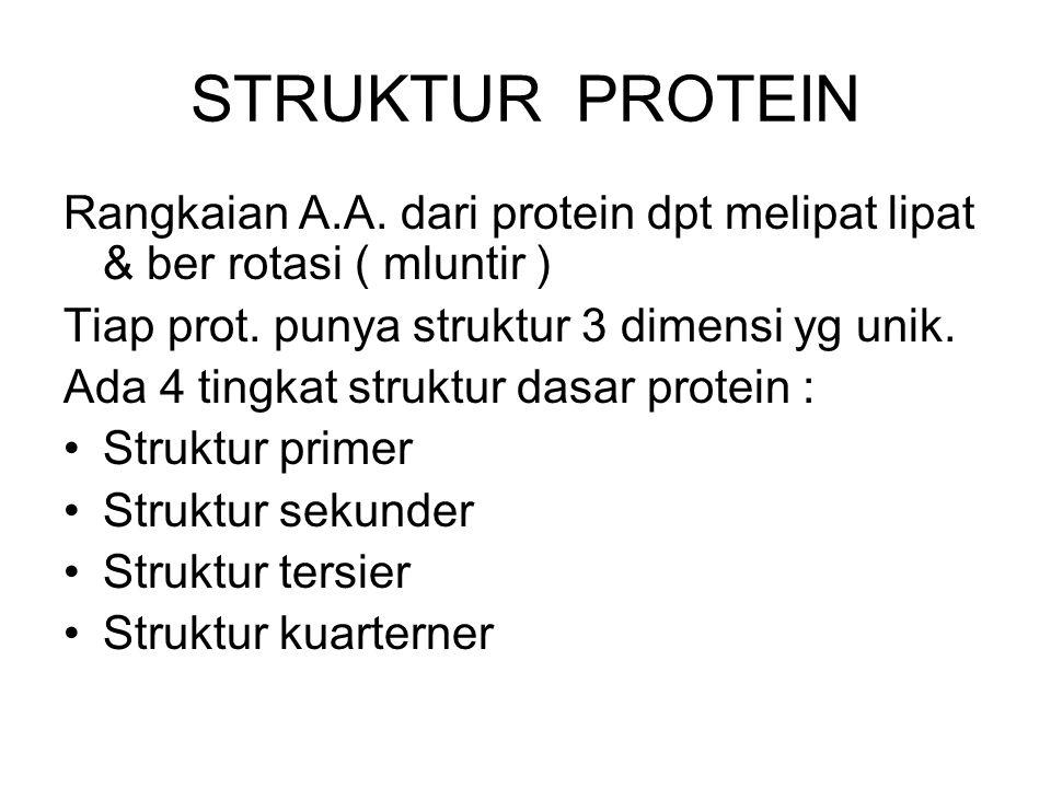 STRUKTUR PROTEIN Rangkaian A.A. dari protein dpt melipat lipat & ber rotasi ( mluntir ) Tiap prot. punya struktur 3 dimensi yg unik.
