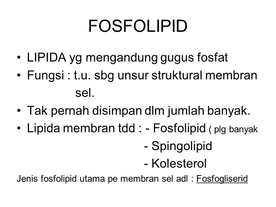FOSFOLIPID LIPIDA yg mengandung gugus fosfat