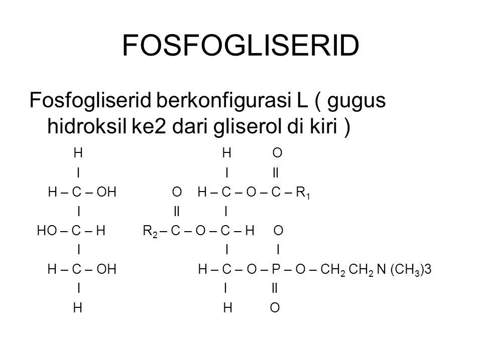 FOSFOGLISERID Fosfogliserid berkonfigurasi L ( gugus hidroksil ke2 dari gliserol di kiri ) H H O.