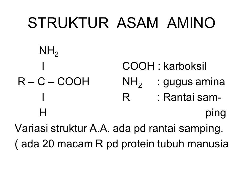 STRUKTUR ASAM AMINO NH2 l COOH : karboksil