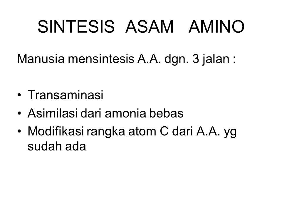 SINTESIS ASAM AMINO Manusia mensintesis A.A. dgn. 3 jalan :