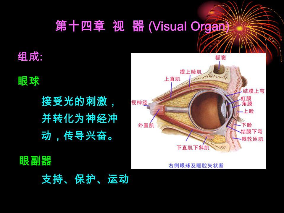 第十四章 视 器 (Visual Organ) 组成: 眼球 接受光的刺激,并转化为神经冲动,传导兴奋。 眼副器 支持、保护、运动