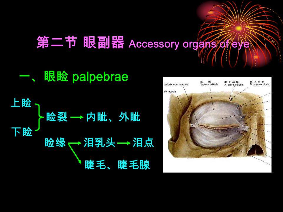 第二节 眼副器 Accessory organs of eye