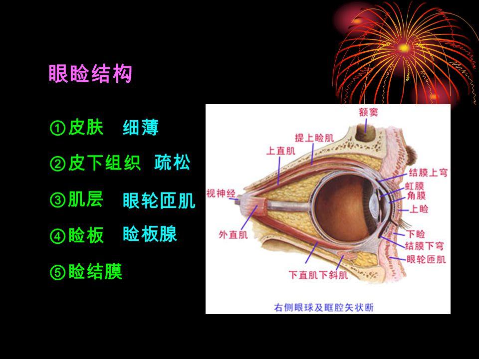 眼睑结构 ①皮肤 细薄 ②皮下组织 疏松 ③肌层 眼轮匝肌 ④睑板 睑板腺 ⑤睑结膜