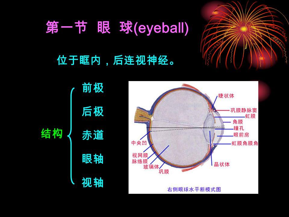第一节 眼 球(eyeball) 位于眶内,后连视神经。 前极 后极 结构 赤道 眼轴 视轴