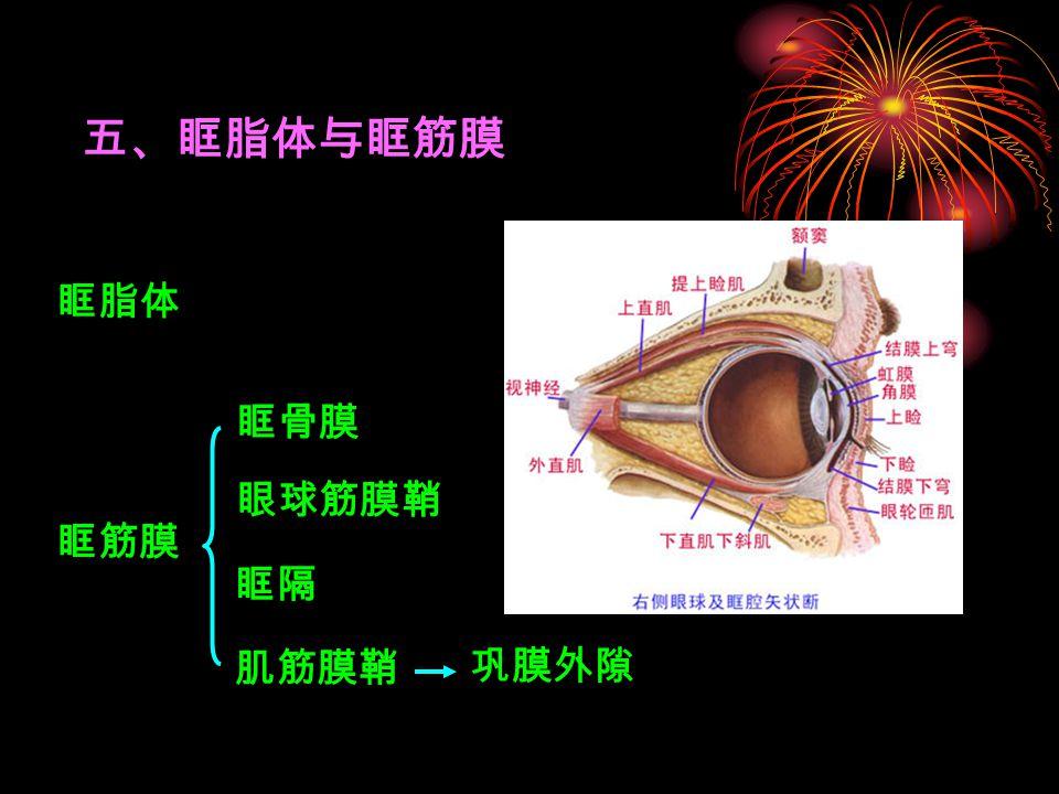 五、眶脂体与眶筋膜 眶脂体 眶骨膜 眼球筋膜鞘 眶筋膜 眶隔 肌筋膜鞘 巩膜外隙