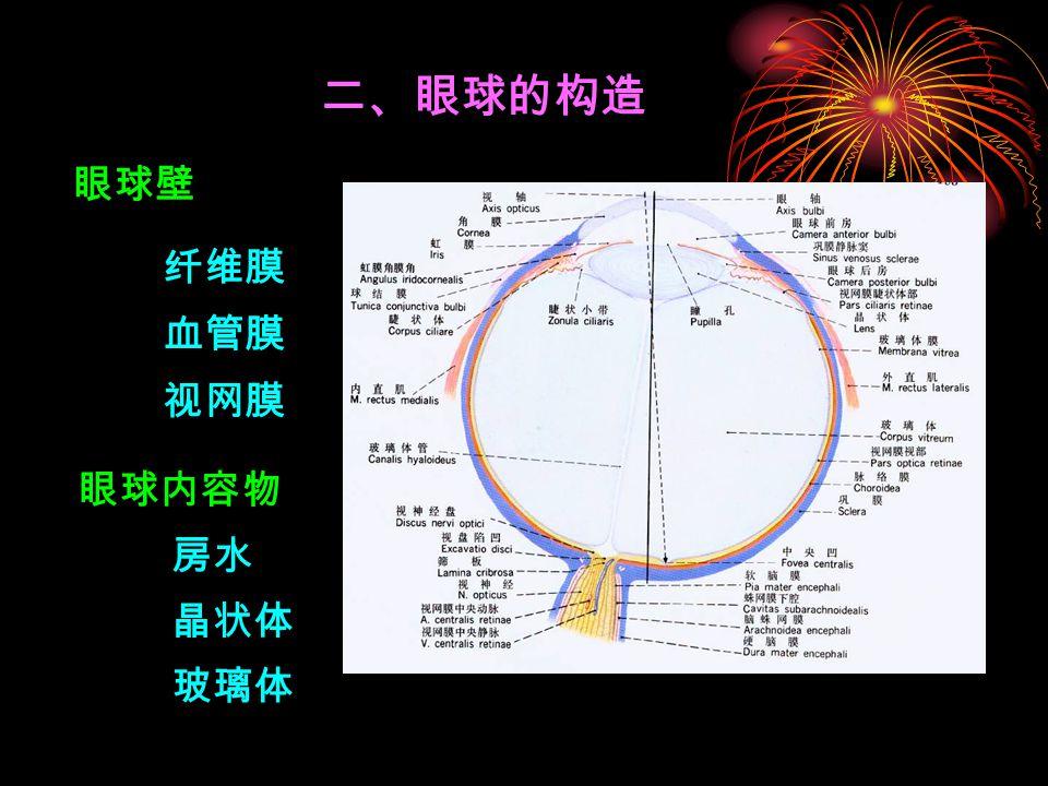 二、眼球的构造 眼球壁 纤维膜 血管膜 视网膜 眼球内容物 房水 晶状体 玻璃体