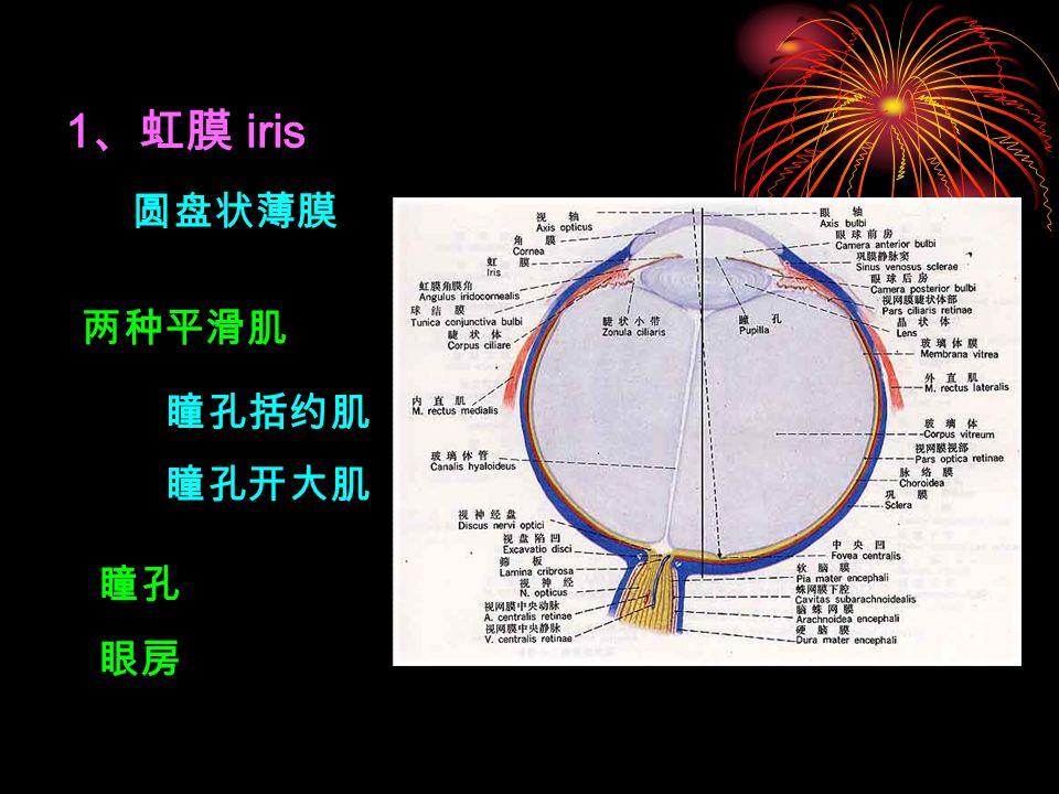 1、虹膜 iris 圆盘状薄膜 两种平滑肌 瞳孔括约肌 瞳孔开大肌 瞳孔 眼房