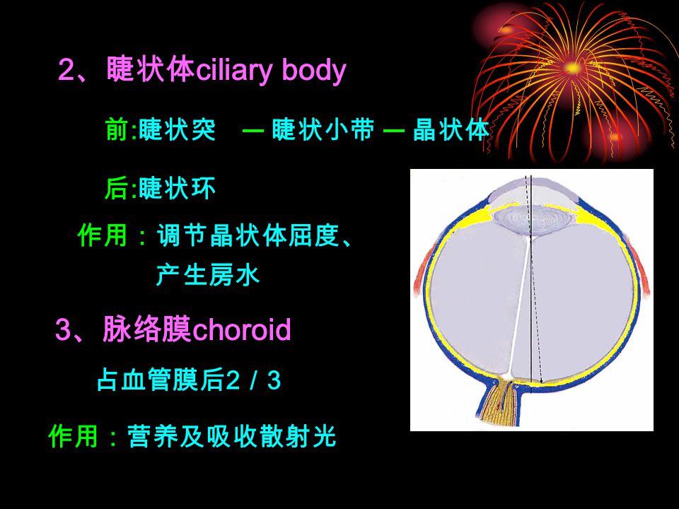 2、睫状体ciliary body 3、脉络膜choroid 前:睫状突 睫状小带 晶状体 后:睫状环 作用:调节晶状体屈度、产生房水