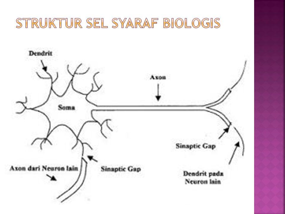 Struktur Sel Syaraf Biologis