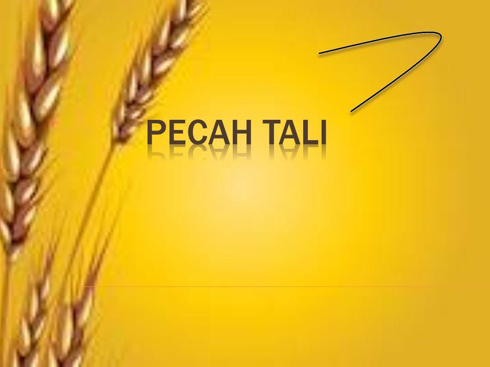 PECAH TALI