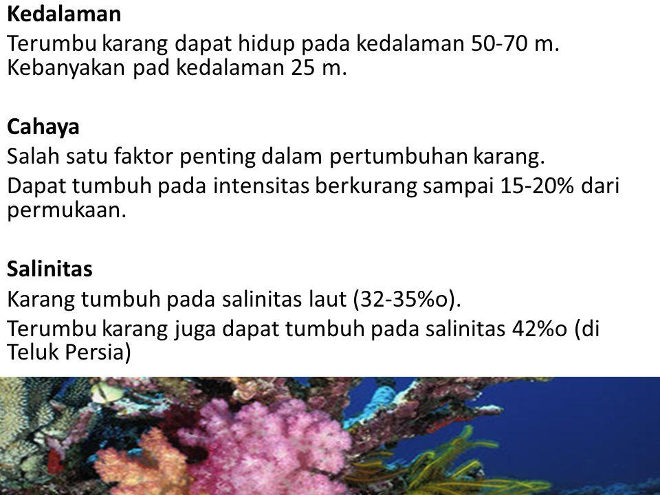 Kedalaman Terumbu karang dapat hidup pada kedalaman 50-70 m. Kebanyakan pad kedalaman 25 m. Cahaya.