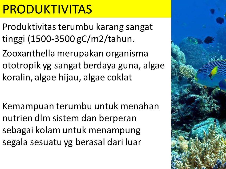 PRODUKTIVITAS Produktivitas terumbu karang sangat tinggi (1500-3500 gC/m2/tahun.