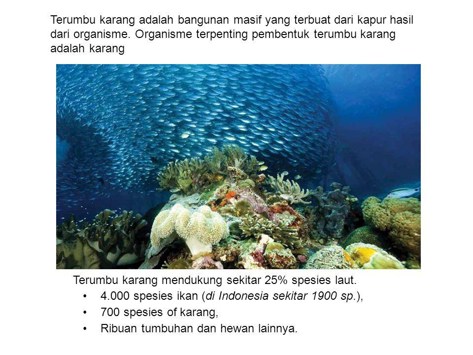 Terumbu karang adalah bangunan masif yang terbuat dari kapur hasil dari organisme. Organisme terpenting pembentuk terumbu karang adalah karang