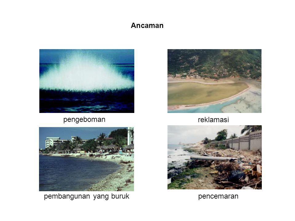 Ancaman pengeboman reklamasi pembangunan yang buruk pencemaran