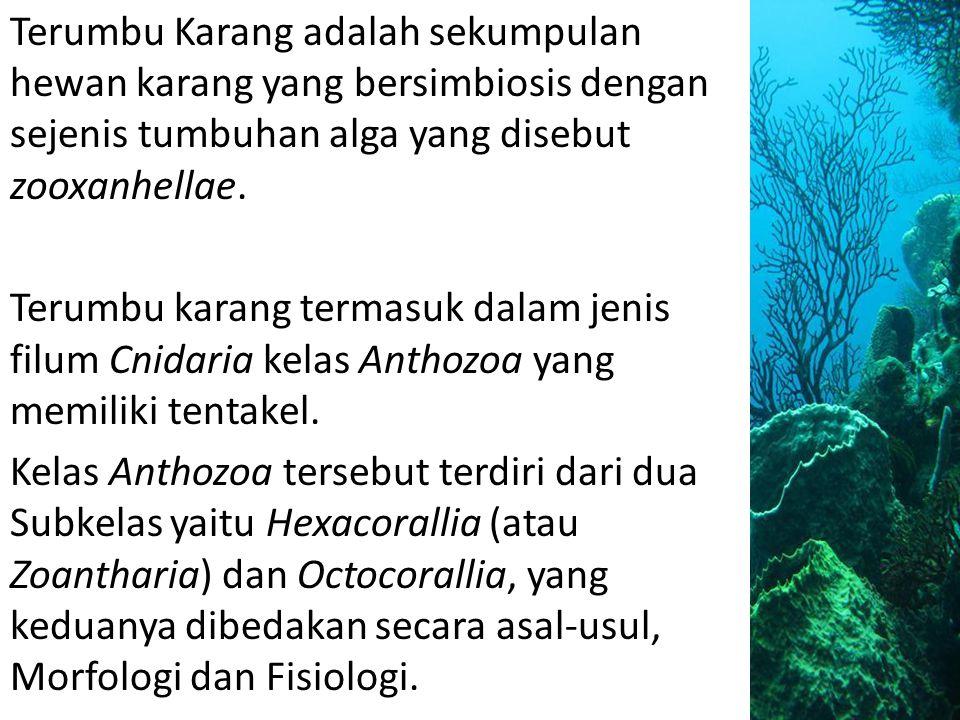 Terumbu Karang adalah sekumpulan hewan karang yang bersimbiosis dengan sejenis tumbuhan alga yang disebut zooxanhellae.
