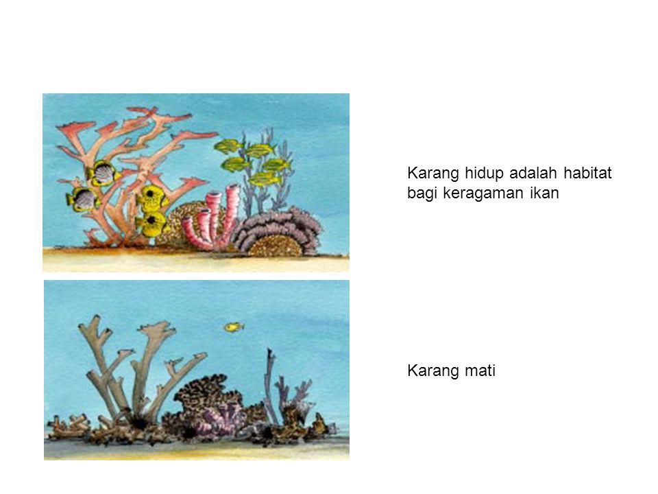 Karang hidup adalah habitat bagi keragaman ikan