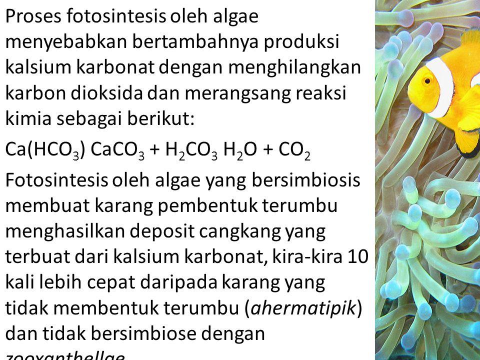 Proses fotosintesis oleh algae menyebabkan bertambahnya produksi kalsium karbonat dengan menghilangkan karbon dioksida dan merangsang reaksi kimia sebagai berikut: