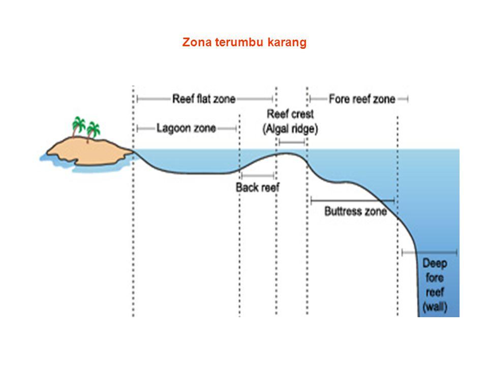 Zona terumbu karang