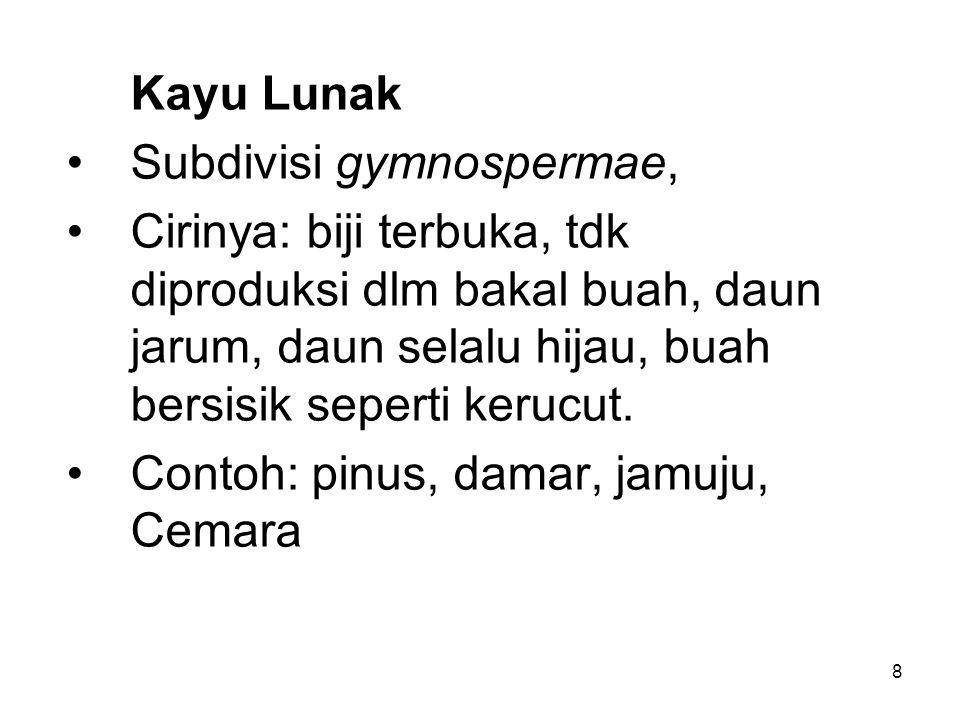 Kayu Lunak Subdivisi gymnospermae,
