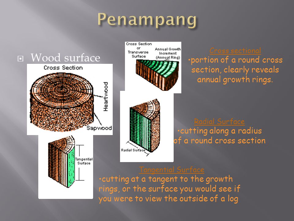 Penampang Wood surface