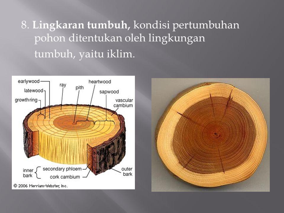 8. Lingkaran tumbuh, kondisi pertumbuhan pohon ditentukan oleh lingkungan tumbuh, yaitu iklim.