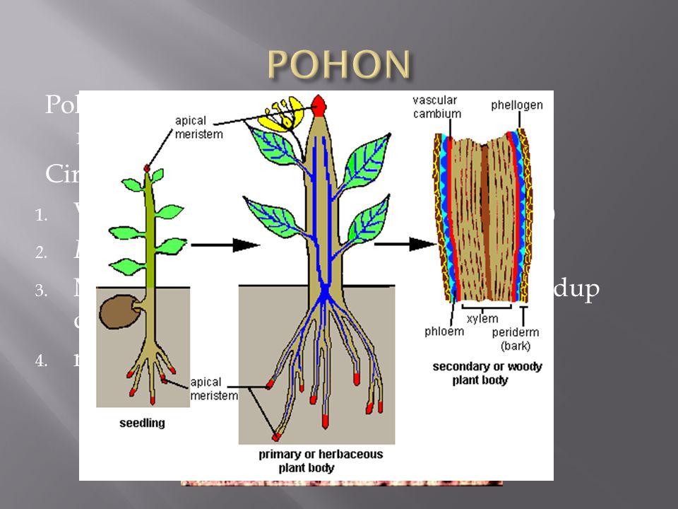 POHON Pohon adalah tumbuh-tumbuhan yang menghasilkan kayu Ciri-ciri :
