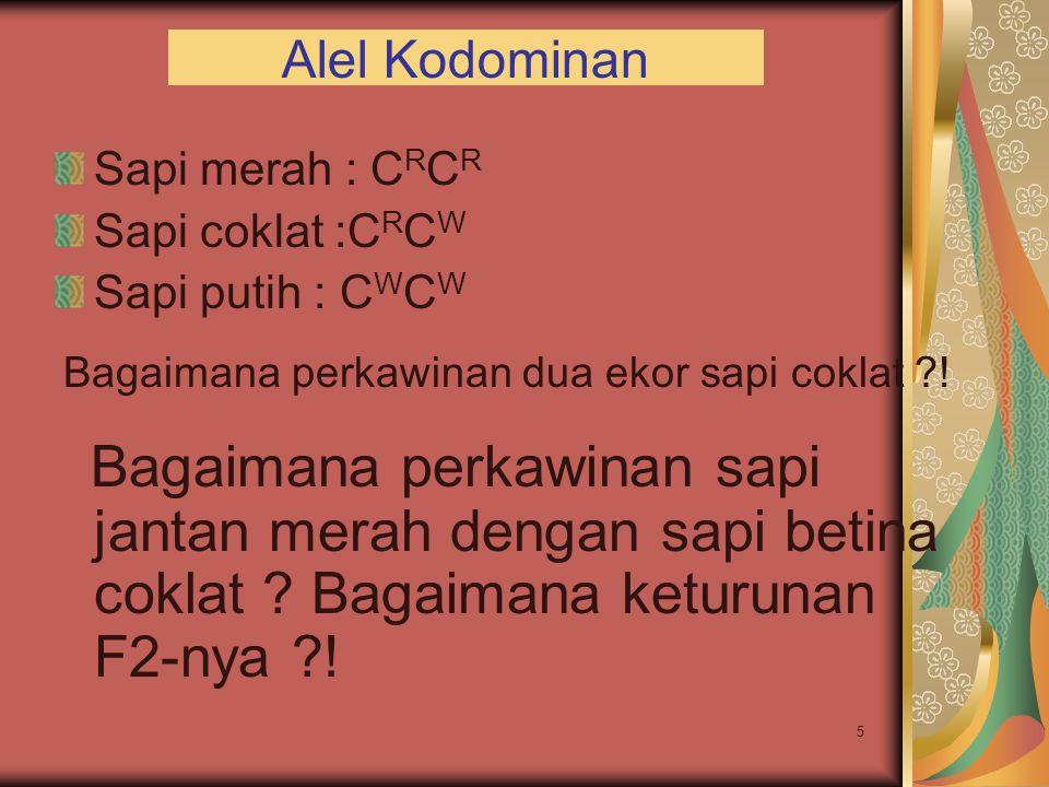 Alel Kodominan Sapi merah : CRCR. Sapi coklat :CRCW. Sapi putih : CWCW. Bagaimana perkawinan dua ekor sapi coklat !