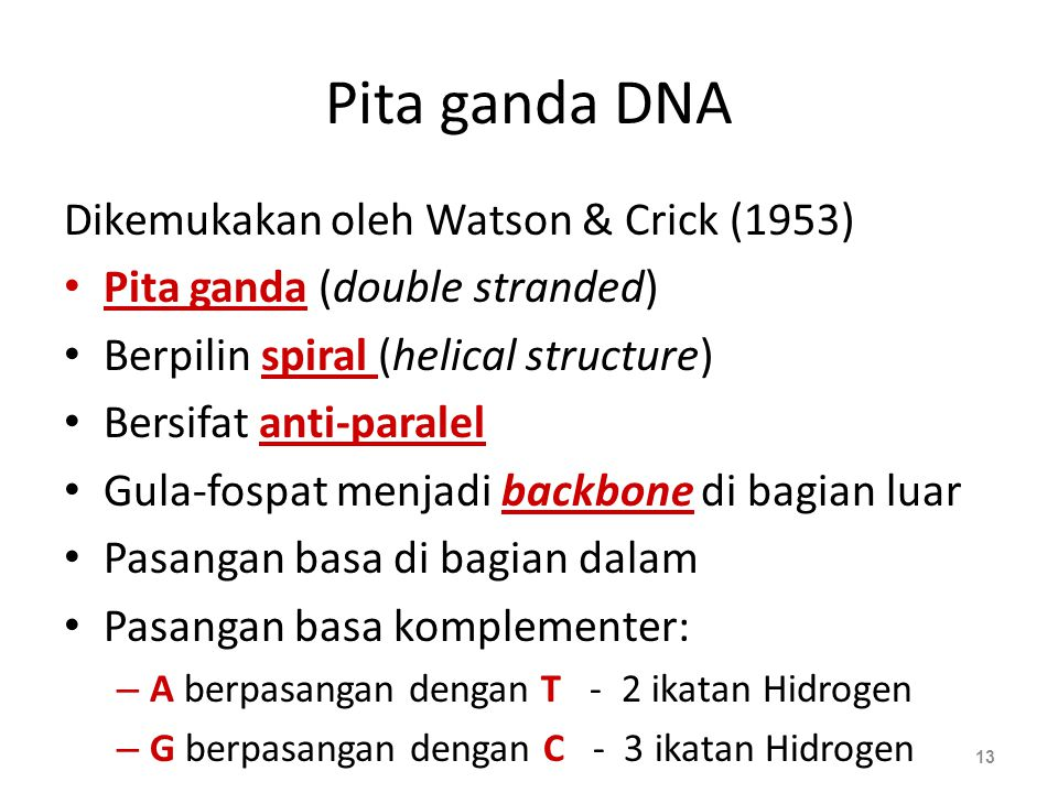 Pita ganda DNA Dikemukakan oleh Watson & Crick (1953)