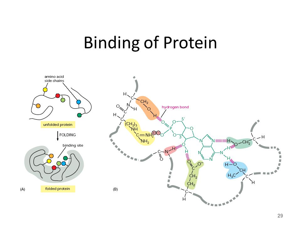 Binding of Protein