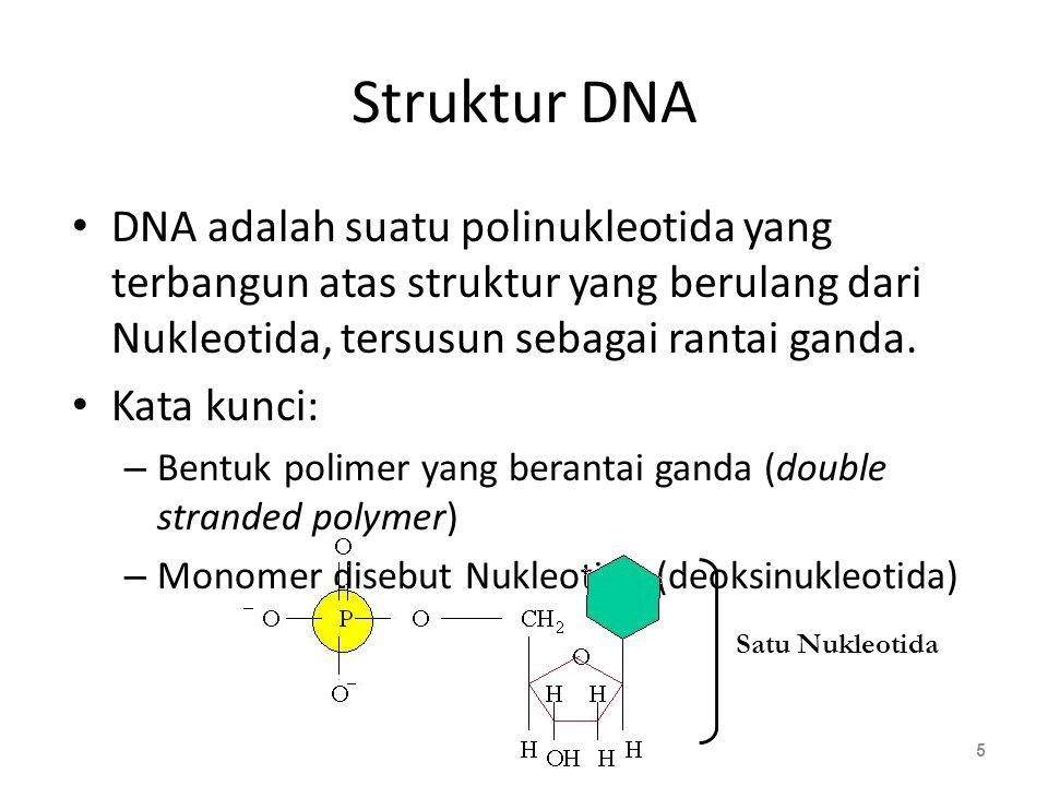 Struktur DNA DNA adalah suatu polinukleotida yang terbangun atas struktur yang berulang dari Nukleotida, tersusun sebagai rantai ganda.