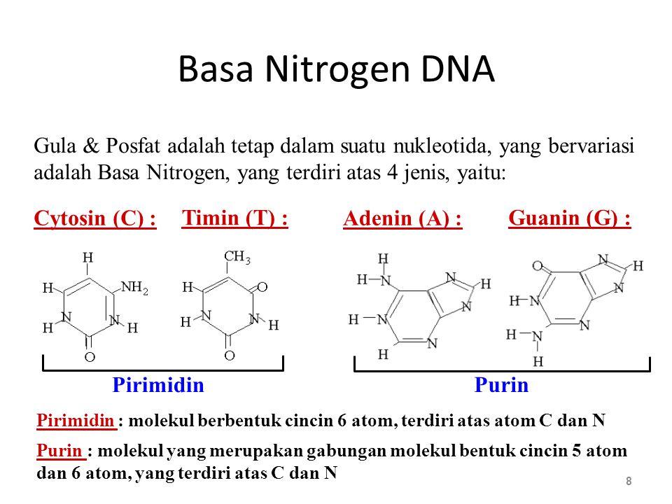Basa Nitrogen DNA Gula & Posfat adalah tetap dalam suatu nukleotida, yang bervariasi. adalah Basa Nitrogen, yang terdiri atas 4 jenis, yaitu: