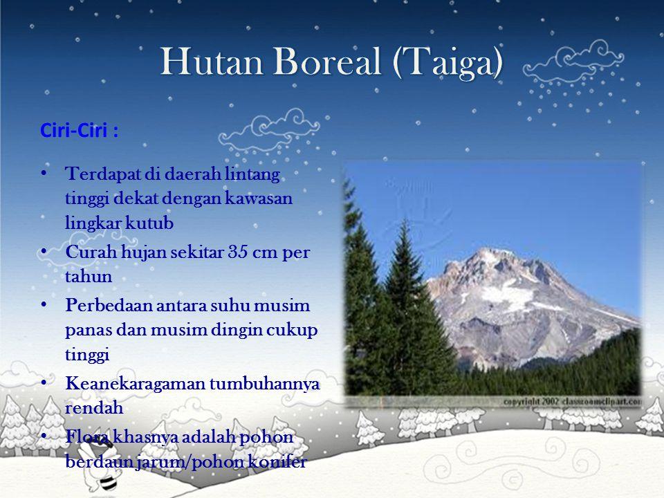Hutan Boreal (Taiga) Ciri-Ciri :