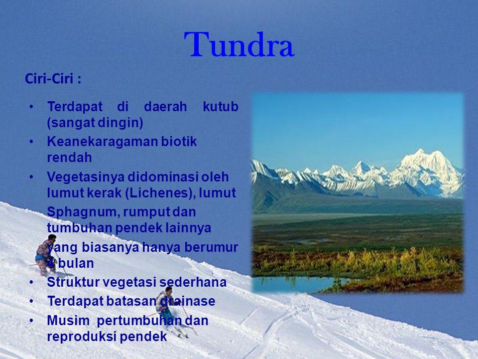 Tundra Ciri-Ciri : Terdapat di daerah kutub (sangat dingin)