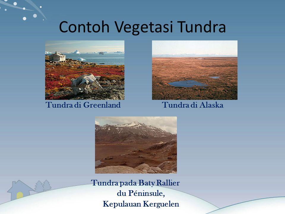 Contoh Vegetasi Tundra