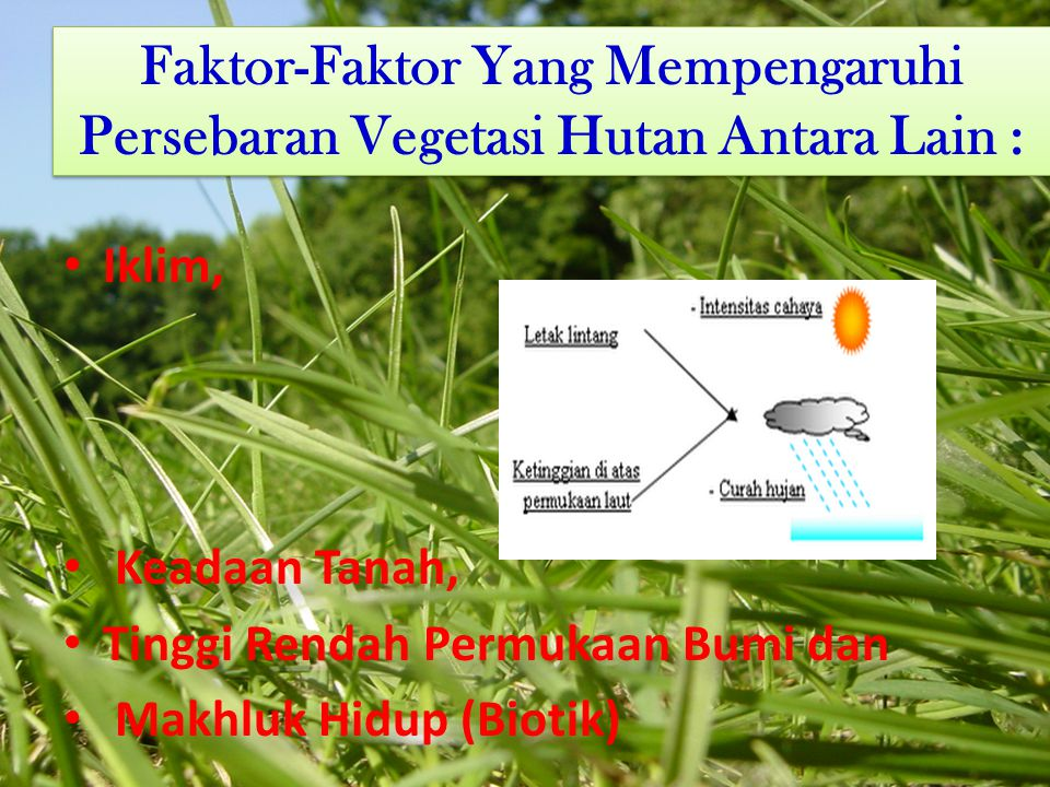 Faktor-Faktor Yang Mempengaruhi Persebaran Vegetasi Hutan Antara Lain :