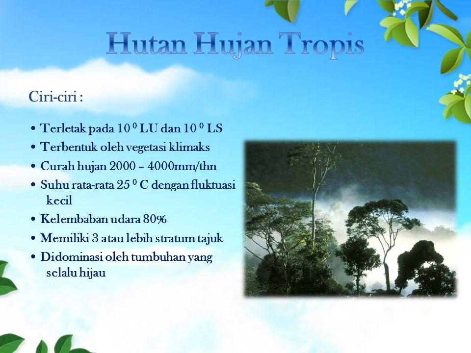 Hutan Hujan Tropis Ciri-ciri :
