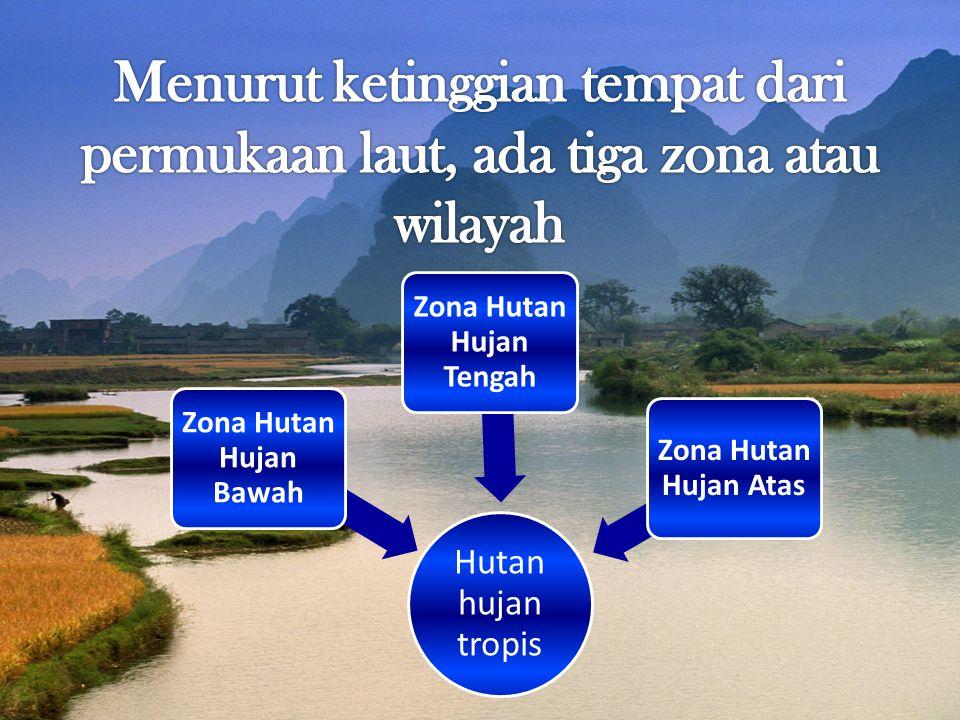 Zona Hutan Hujan Tengah
