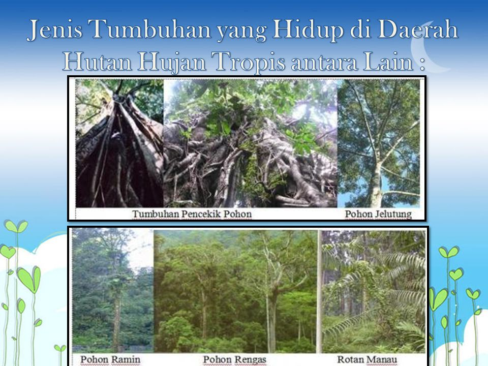 Jenis Tumbuhan yang Hidup di Daerah Hutan Hujan Tropis antara Lain :