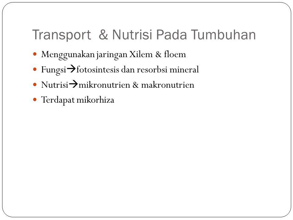 Transport & Nutrisi Pada Tumbuhan