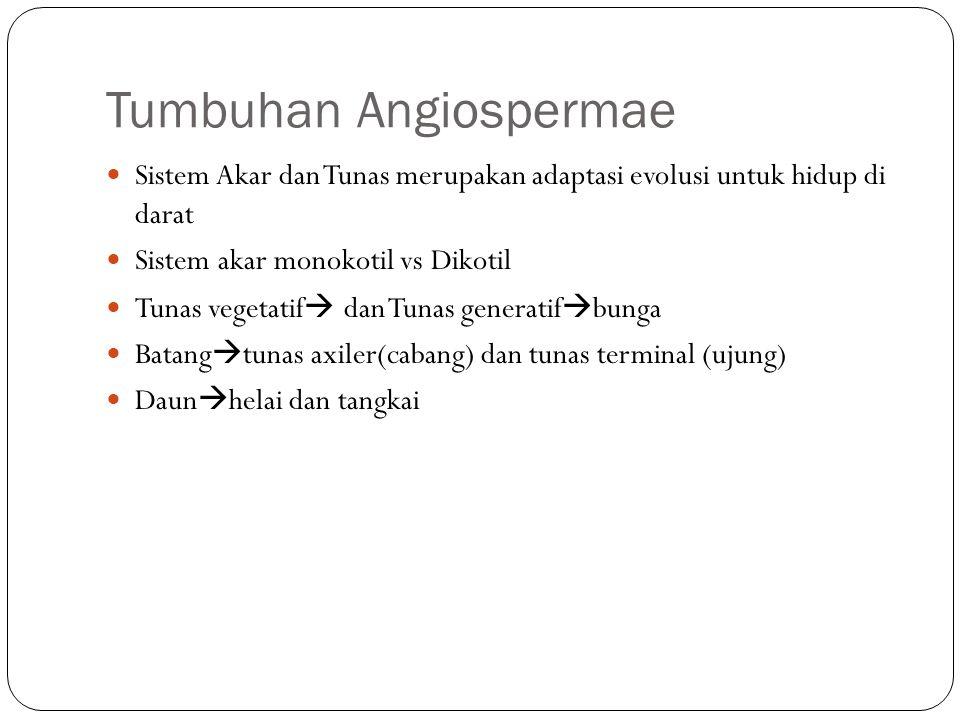 Tumbuhan Angiospermae