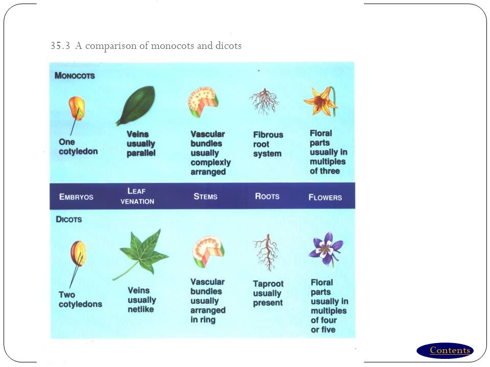 35.3 A comparison of monocots and dicots
