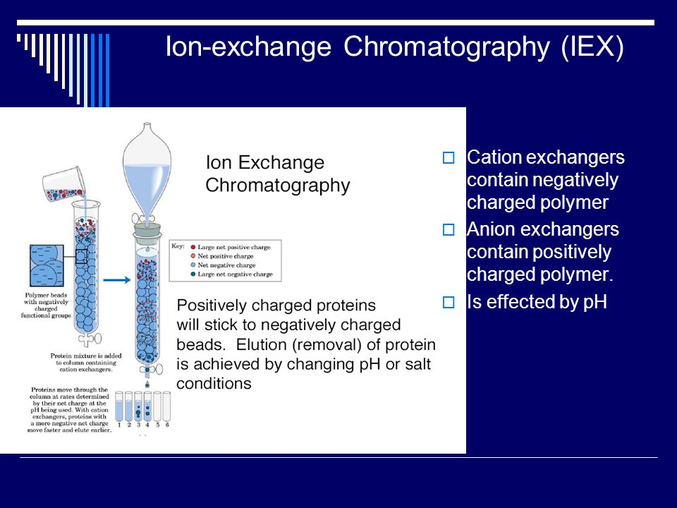 Ion-exchange Chromatography (IEX)