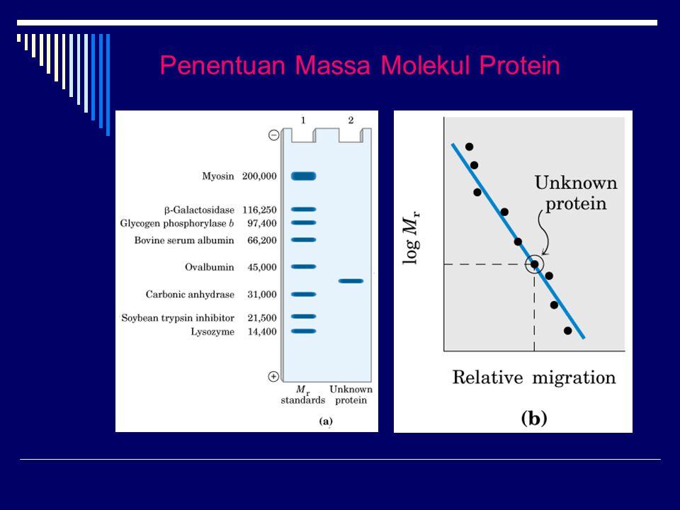 Penentuan Massa Molekul Protein