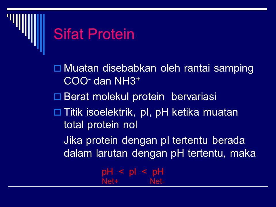 Sifat Protein Muatan disebabkan oleh rantai samping COO- dan NH3+