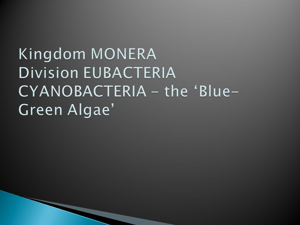 Kingdom MONERA Division EUBACTERIA CYANOBACTERIA - the 'Blue-Green Algae'