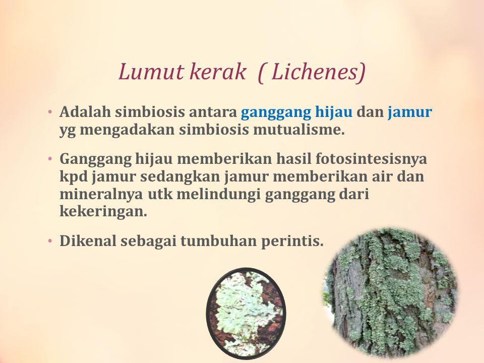 Lumut kerak ( Lichenes)