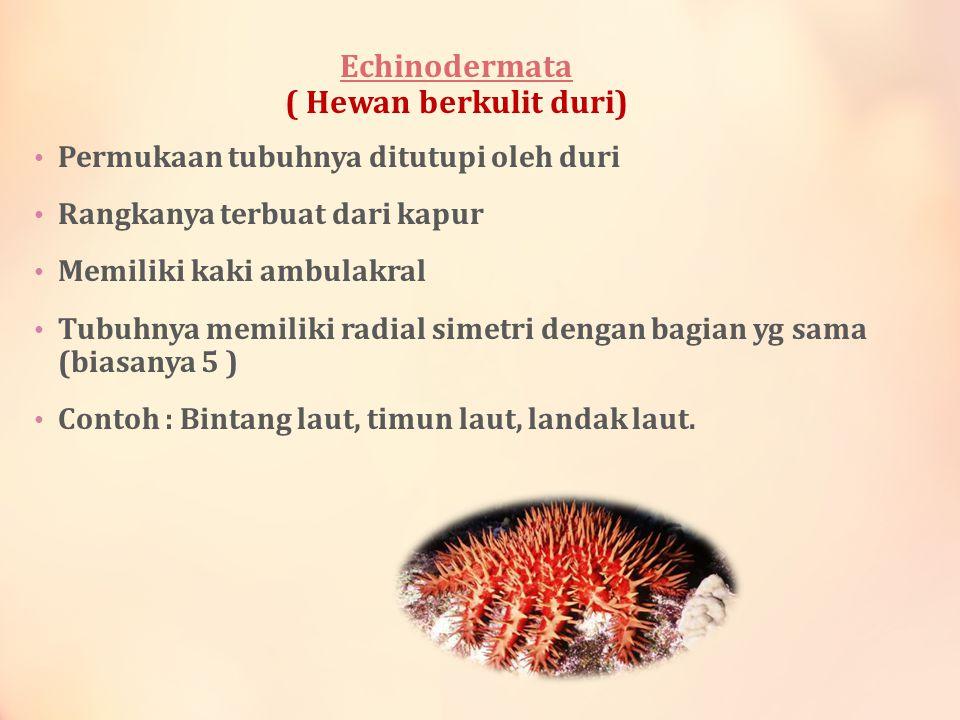 Echinodermata ( Hewan berkulit duri)