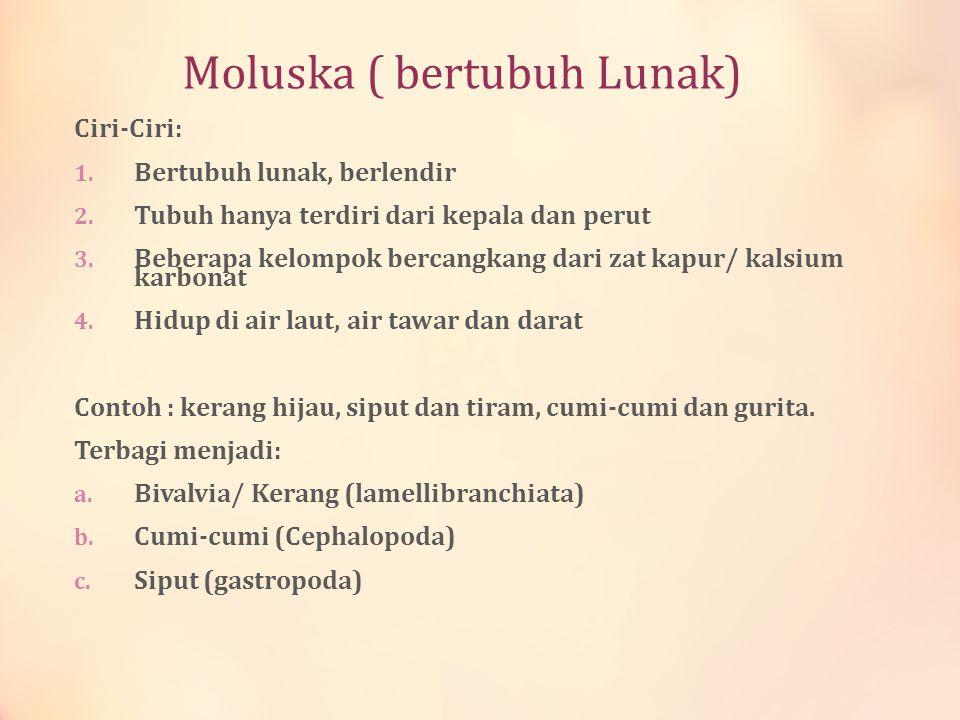 Moluska ( bertubuh Lunak)